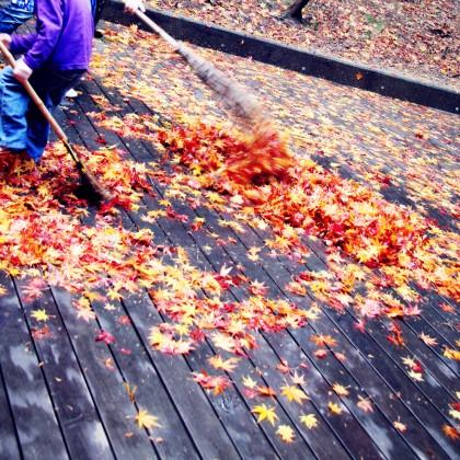 紅葉の落ち葉