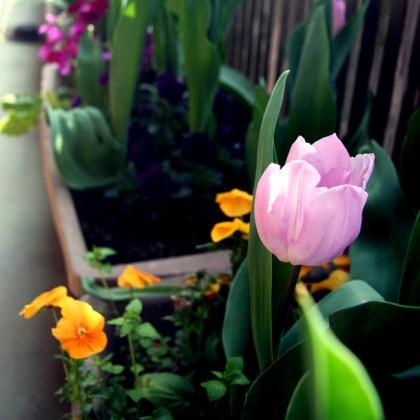 もう春ですねー