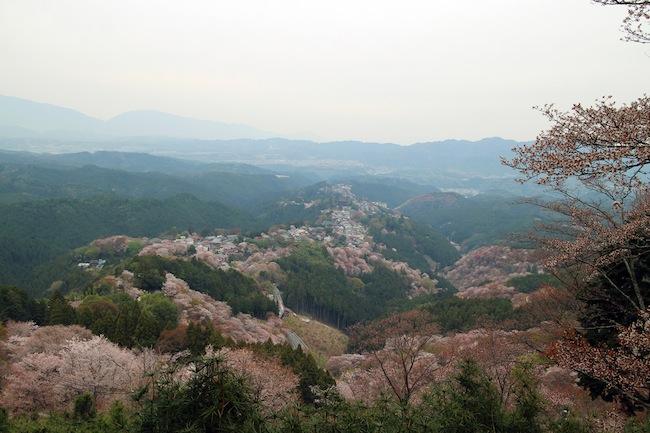 世尊寺跡(花矢倉)からの俯瞰景。