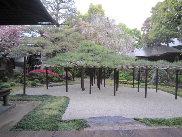 角屋奥座敷の庭と枝垂桜