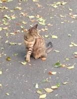 学内にいる猫