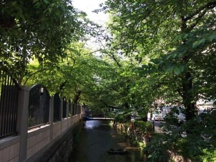 自転車置き場の近く、高瀬川の緑がキレイ