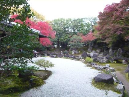 圓徳院のお庭。紅葉が見頃で、美しいです。