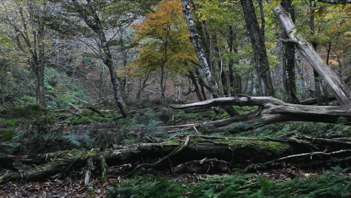 森の京都001