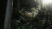 森の京都005