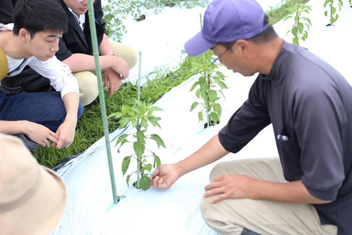 無肥料栽培に真撃に取り組んでおられる「ハイツ野菜研究部」の中嶋さん。
