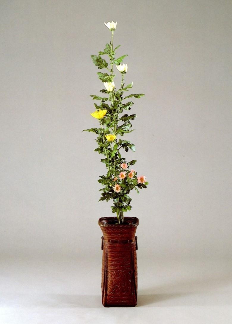 【和の伝統文化コース】九月、重陽の節句 ー『菊』の話ー